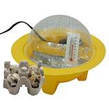 quail eggs with incubator