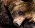 Bears and other animals go into a deep sleep for most of the winter.