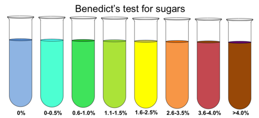 Benedict's test for sugars