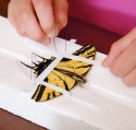 Use paper strips to hold down butterfly wings on a spreading board