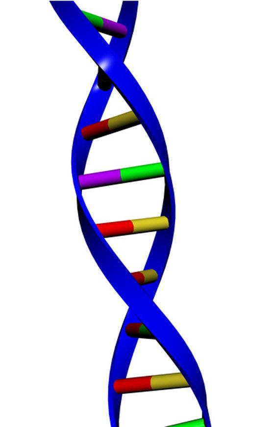 Build a DNA Model