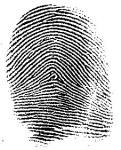 Dusting for Fingerprints