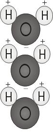 Water molecules line up positive end to negative end