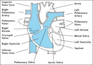 System Heart Diagram