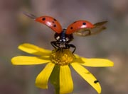 Beetle Science Projects