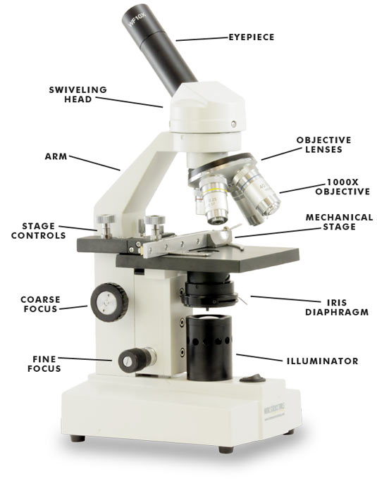 electric compound microscope parts and functions