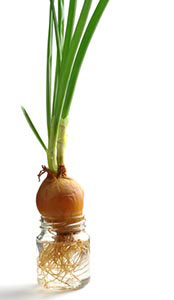 Regrow Vegetables from Kitchen Scraps