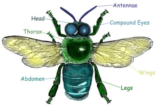 Insects Lessons for Pre-K-2 - Early Childhood Science