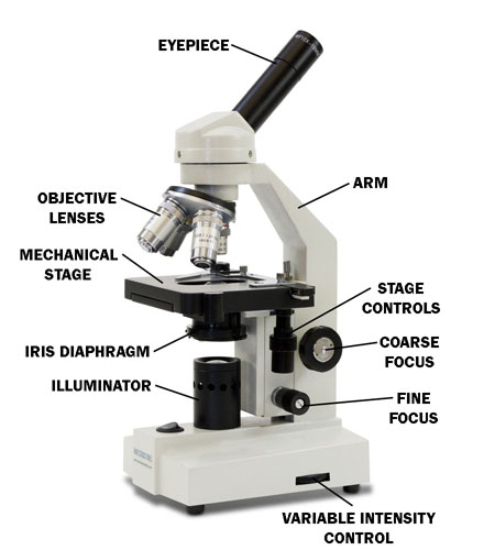compound microscopes parts and terms